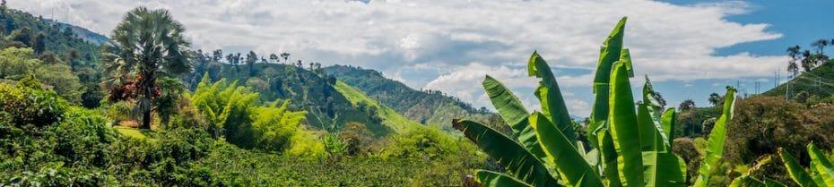 Organic Mexican Coffee Finca
