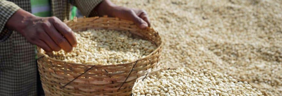 Varietals from Ethiopia