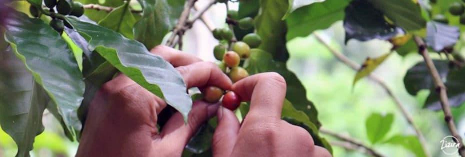 Organic coffee certification history